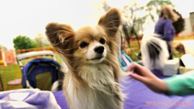 Monmouth County SPCA dog walk & pet fair 2019 71 of 95