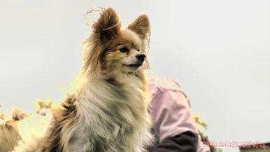 Monmouth County SPCA dog walk & pet fair 2019 73 of 95