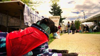 Monmouth County SPCA dog walk & pet fair 2019 9 of 95