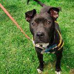 Monmouth County SPCA dog walk & pet fair 2019 95 of 95