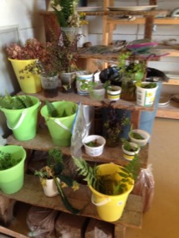 Plants waiting for their turn to be pressed into clay.
