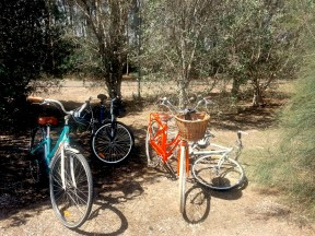 sample bike catalogue