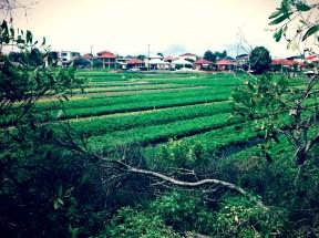 herb fields