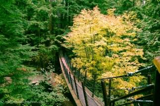 Treetop bridge by yellow tree