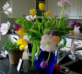 Welcome tulips