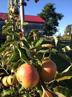 Redbyrd's Reynold Road Orchard