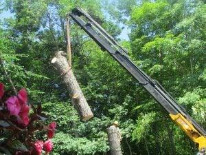 arborist tree services