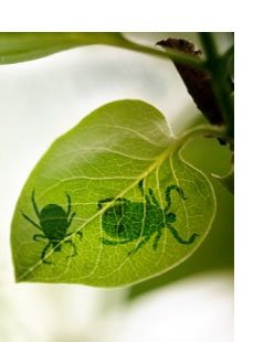 rt-insects-diseases