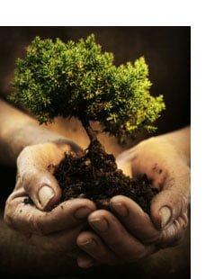 rt-tree-care-maintenance