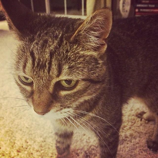 cat 2a
