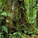 Accra Caucus statement on forests and climate change