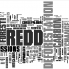 REDD in the news: 9-15 March 2009