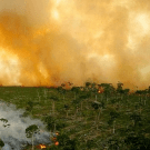 UN and Norway launch REDD programme