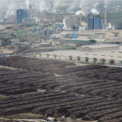 Greenpeace investigation shows that Asia Pulp and Paper is pulping tiger habitat