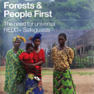 Greenpeace starts global consultation on the need for universal REDD+ safeguards