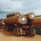 Alarm bells: Olam International and REDD in the Republic of Congo