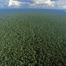 Independent Evaluation Group review of the FCPF: World Bank needs a high-level strategic discussion on its overall approach to REDD