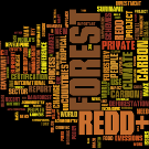 REDD in the news: 25 February - 3 March 2013