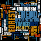 REDD in the news: 4-10 March 2013
