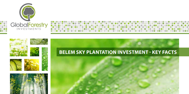 Global Forestry Investments