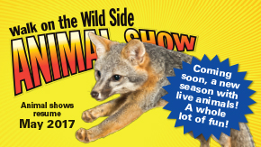 Walk on the Wild Side Animal Show