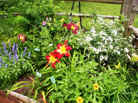 blog-garden3.JPG
