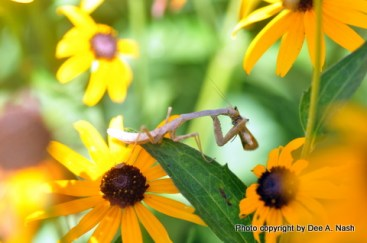 What Do Wolf Spiders Eat >> Why do gardens matter? - Red Dirt Ramblings®