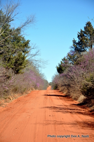 Yes, it's that red around here. Can you see the redbuds lining either side of the road?