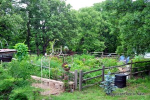 The back garden in May 2011 before the heat hit in earnest.