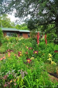 The back garden in mid-June 2012.