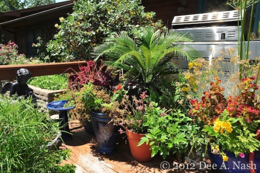 Some of the containers on the back deck. I'm watering all of them with a drip system.
