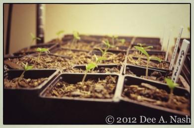 If you want, you can start seeds indoors. I don't think I will for fall and winter this year.