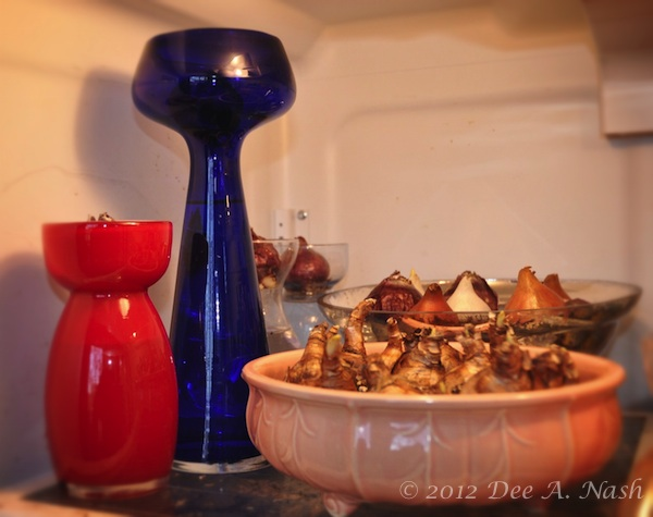 Most bulbs, other than paperwhites and amaryllis, need a chilling period. Mine hung out at first in the garage fridge.