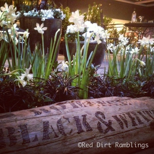 Best use of black mondo grass at the show. White daffodils with black mondo grass.