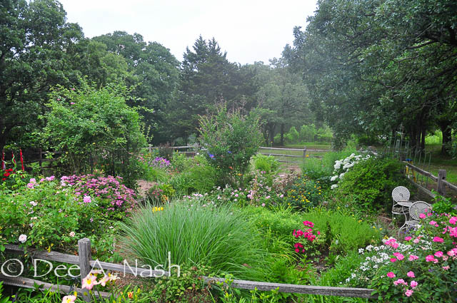 The back garden in June 2013.