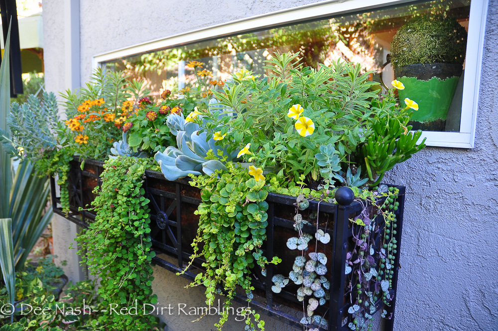 A window box filled with succulent offerings. People in Oklahoma could learn from this. Water hungry plants have no place in a hanging pot.