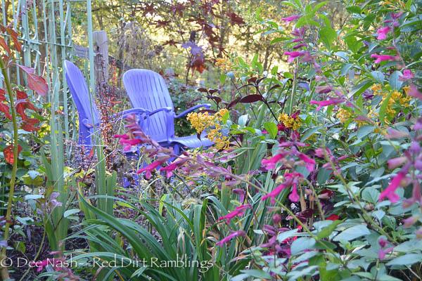 Salvia vanhouttei 'Wendy's Wish' with my purple chairs