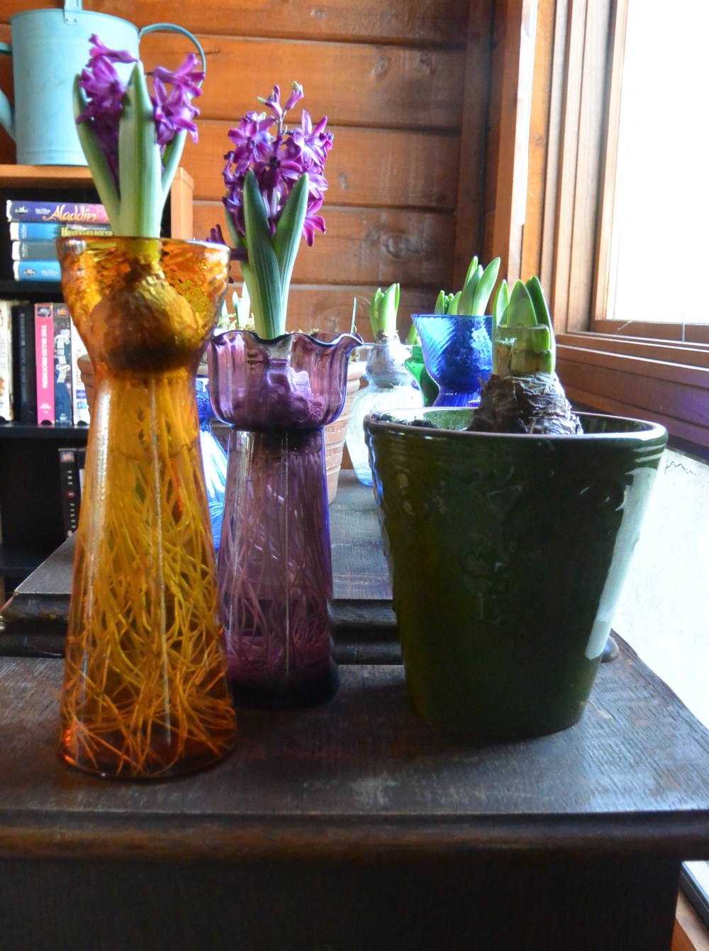 An indoor garden of blooming bulbs makes winter go by faster.