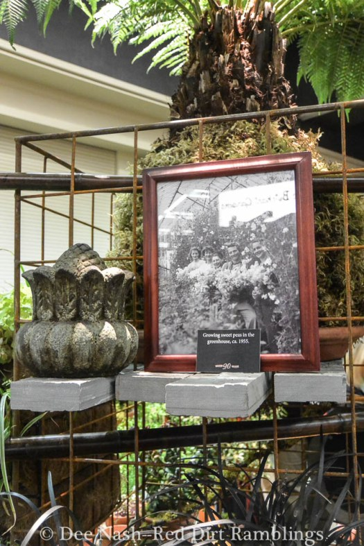 This display from Swanson's Nursery brought together new display ideas with their company history. I loved it.