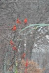 Cardinals lined up for the bird feeder. Do you also see the American Goldfinch?