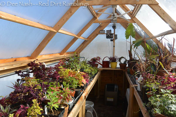 See how tall the plants have grown in the greenhouse.