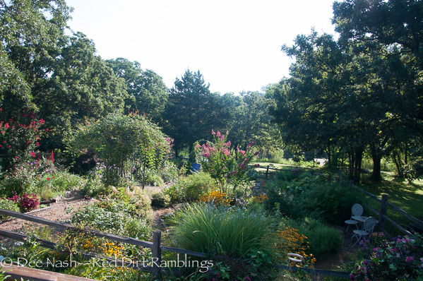 This is just part of the back garden shot in early morning. I have many other beds and borders too.
