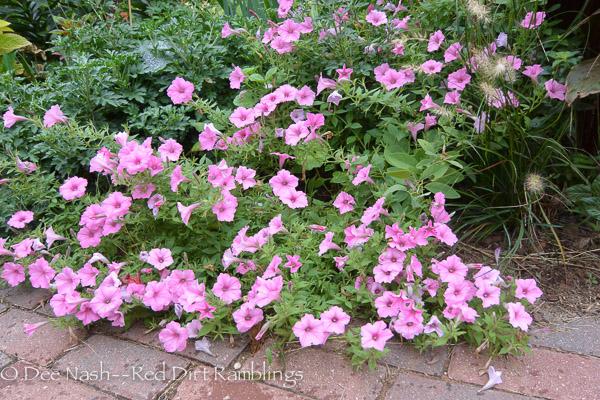 Supertunia® Vista Bubblegum® pink petunias are always a good plant in my garden.