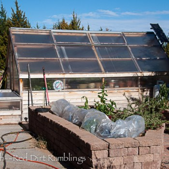 Greenhouse, cold frame and covered up potager