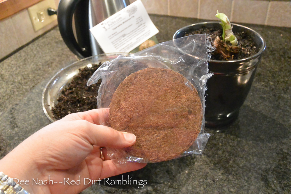 Coir in an amaryllis bulb kit isn't worth using in my opinion.
