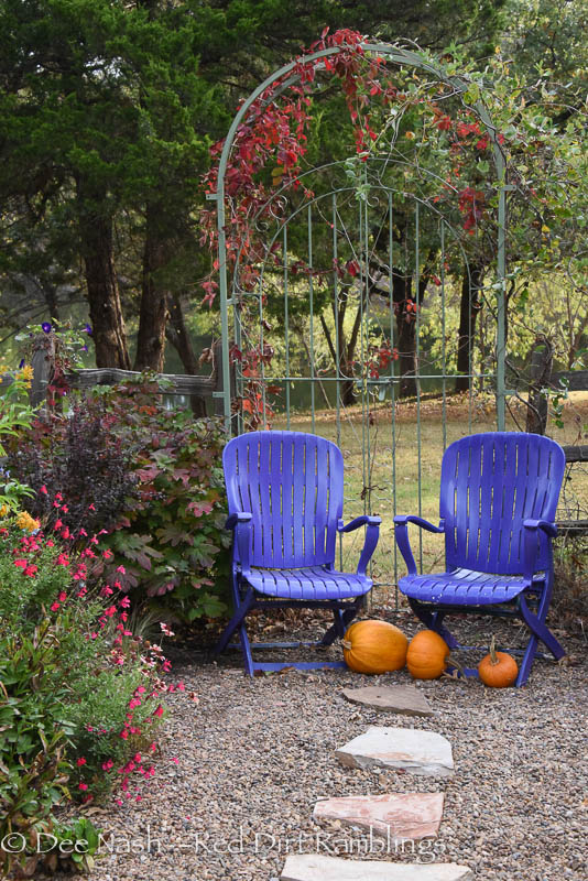 Arbor with Virginia creeper turning red in fall and purple chairs