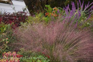 Pink muhly grass and Mexican bush sage welcomed visitors.