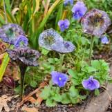 Small blown glass flowers Dee Nash's garden