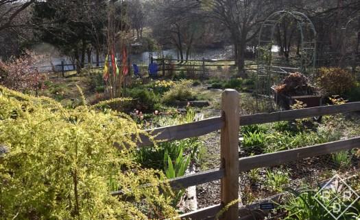 Back garden in the morning light.