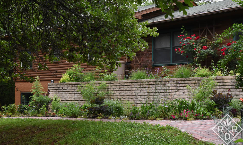 The newest garden border with young plants and Rosa Home Run® in the upper border.